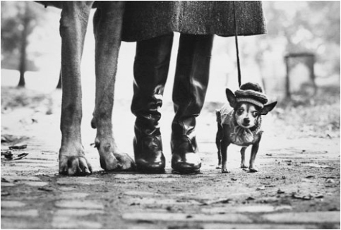 Elliot_Erwitt_NYC_1974_dog_legs
